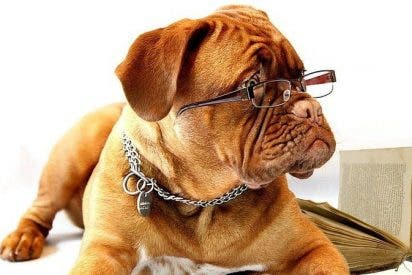 Mascotas: ¿Quieres saber qué tipo de dueño de perro eres?
