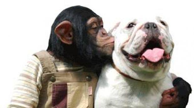 Cuida de tu mascota como un profesional