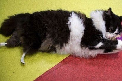 Te presentamos al primer 'gato biónico' de la historia
