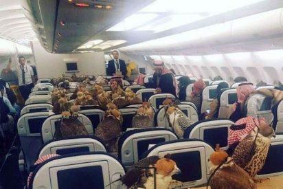 Los 80 halcones del príncipe saudita viajando en la clase turista de Qatar Airways