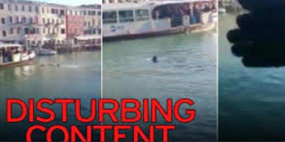 Así se ahoga en el Gran Canal de Venecia un africano al que cubren de insultos