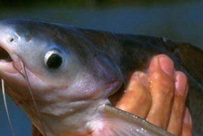 Retiran de colegios y supermercados el panga, un pescado 'low cost' que se ahoga en su mala fama