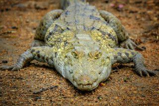 Los aldeanos decapitan a un cocodrilo de 5 metros y media tonelada porque era el 'demonio' y llevaba 50 años 'persiguiéndoles'