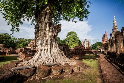 Este es el árbol que más ha influido en la historia de la humanidad