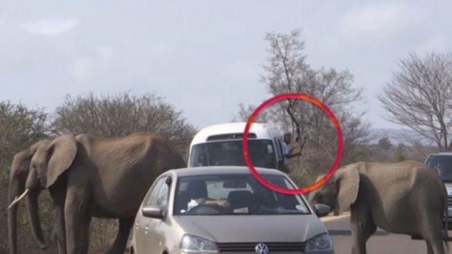 Muere aplastado por un elefante con el que quería hacerse un selfi