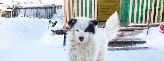 El perro que ha salvado a un niño abandonado por su madre de morir congelado