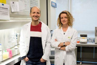 Científicos españoles descubren que las células tumorales secuestran a las sanas para promover la metástasis