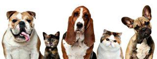 Ineficaz lucha contra los excrementos de perro
