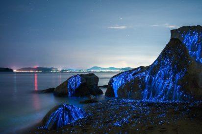 La belleza natural e hipnótica de los camarones bioluminiscentes o luciérnagas de mar