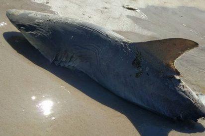 Pánico y misterio ante la criatura que pudo comerse por la mitad a este tiburón