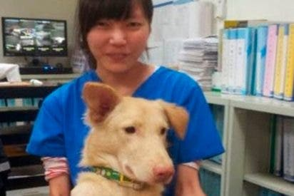 La terrible historia de la veterinaria que se suicidó con el mismo medicamento con el que sacrificaba a los perros