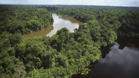 Descubren que los bosques amazónicos altos y viejos, son más resistentes a las sequías