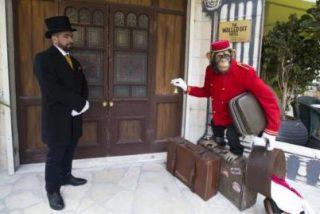 El hotel de Cisjordania que presume de tener la peor vista del mundo