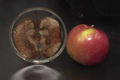Logran hacer crecer tejido humano en manzanas