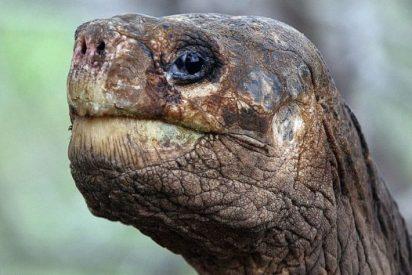 La insólita historia de 'El solitario Jorge', símbolo de las Galápagos