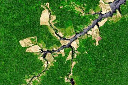 La selva amazónica no es tan virgen como se creía