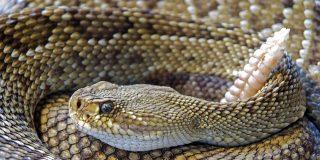 Cuando una serpiente de cascabel mordió a un chaval en un parque de Madrid
