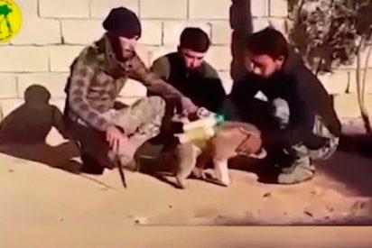 El vídeo del tembloroso perrito que ISIS carga de bombas contra sus enemigos