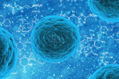 Expertos españoles descubren que el intestino tiene células madre resistentes a la quimioterapia