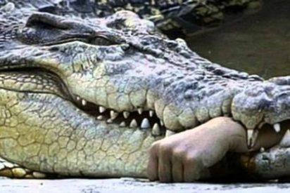 Así se come el cocodrilo la cara del chulito domador ante un aterrado público