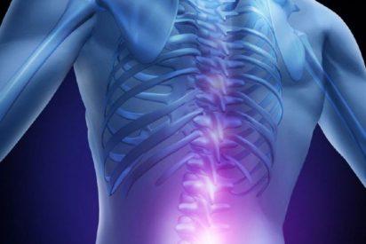 Científicos españoles trabajan en un implante para restaurar médulas espinales lesionadas