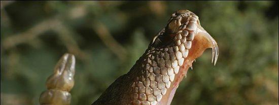 El joven que ha sido mordido por una serpiente de cascabel en un parque madrileño