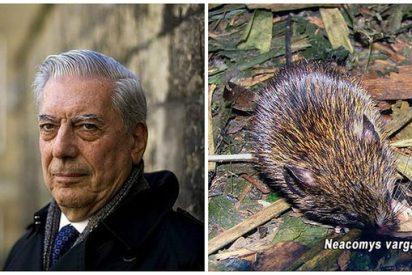 Simpático roedor fue bautizado en honor al Nobel Mario Vargas Llosa