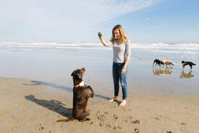 Startup española lanza un innovador geolocalizador de mascotas