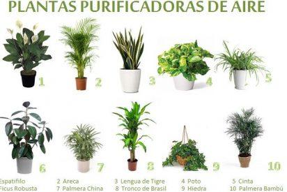 Las 10 plantas que liberan tu casa de sustancias tóxicas según la NASA