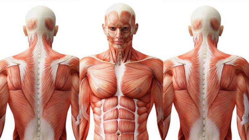 Retos: los 9 límites que no soporta el cuerpo humano