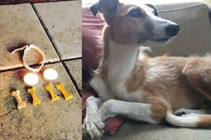 Rinden homenaje a Iggy, el perro de rescate que murió en el atentado de Estocolmo
