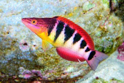 Descubren impresionantes nuevas especies en las aguas más profundas de la Isla de Pascua