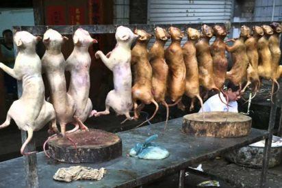 Taiwán aprueba una ley que prohíbe el consumo de carne de perro y gato
