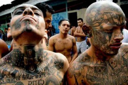 Narcos: El sicario desnudo mutilado vivo por los 'Zetas' entre súplicas y alaridos
