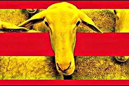 El odio a España a través de los libros de texto en Cataluña
