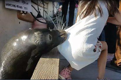 La niña atacada por el lobo marino tiene una infección potencialmente mortal