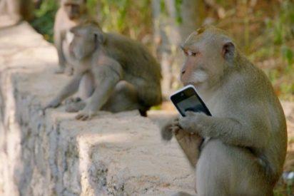 [VÍDEO] La impresionante 'mafia de monos' adiestrados que roban a los turistas en Indonesia