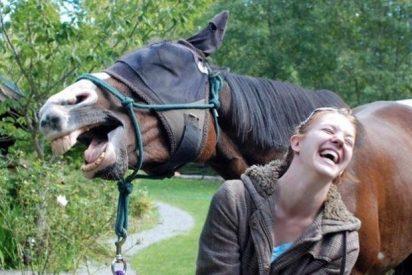 [VÍDEO] Saca de paseo a un caballo jubilado y se arrepiente al instante