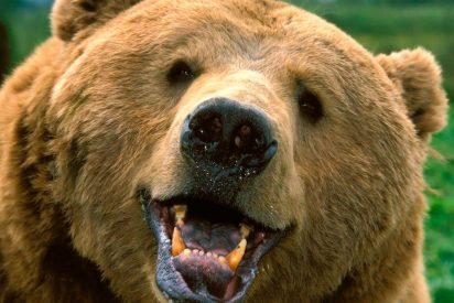 [VÍDEO] El escalofriante encontronazo entre dos ciclistas y un oso