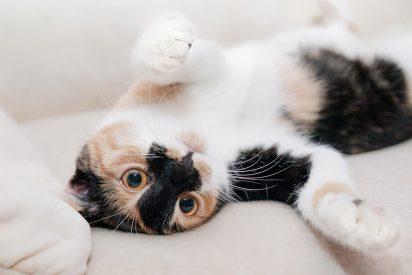 [VÍDEO] La curiosidad 'mató' al gato y este video lo demuestra