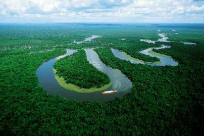 [VÍDEO] Google Earth revela 467 millones de hectáreas de bosque sin registrar