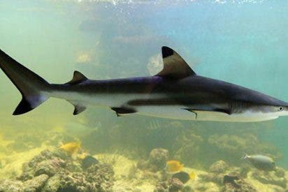 [VÍDEO] ¿Son realmente efectivas las pastillas de cartílago de tiburón?