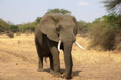 [VÍDEO] Un elefante carga con furia contra los turistas en un safari