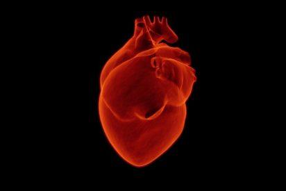 [VÍDEO] Cosas que seguro no sabías sobre el corazón