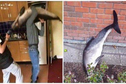 Unos desalmados irlandeses bailan con un delfín muerto y luego lo tiran