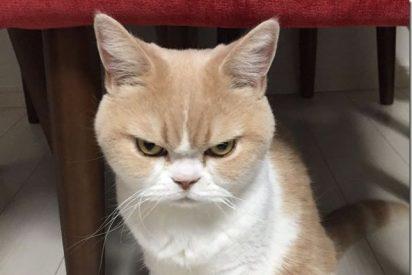 [VÍDEO] Un sólo gato les da una paliza a una 'banda de perros quinquis'