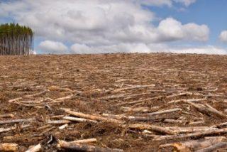 Líderes de distintas religiones se dan cita en Oslo para atajar el problema de la deforestación mundial