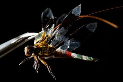 [VÍDEO] La alucinante libélula-cyborg