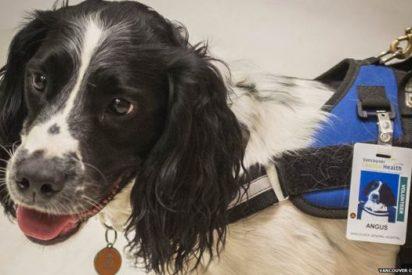 Los increíbles perros 'médicos' que cazan superbacterias en un hospital de Canadá