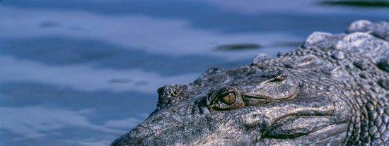 [VÍDEO] Coloca su cabeza en la boca de un cocodrilo y pasa esto...